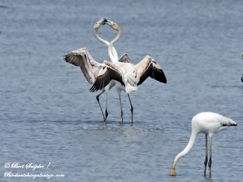 Flamingos Alentejo Portugal