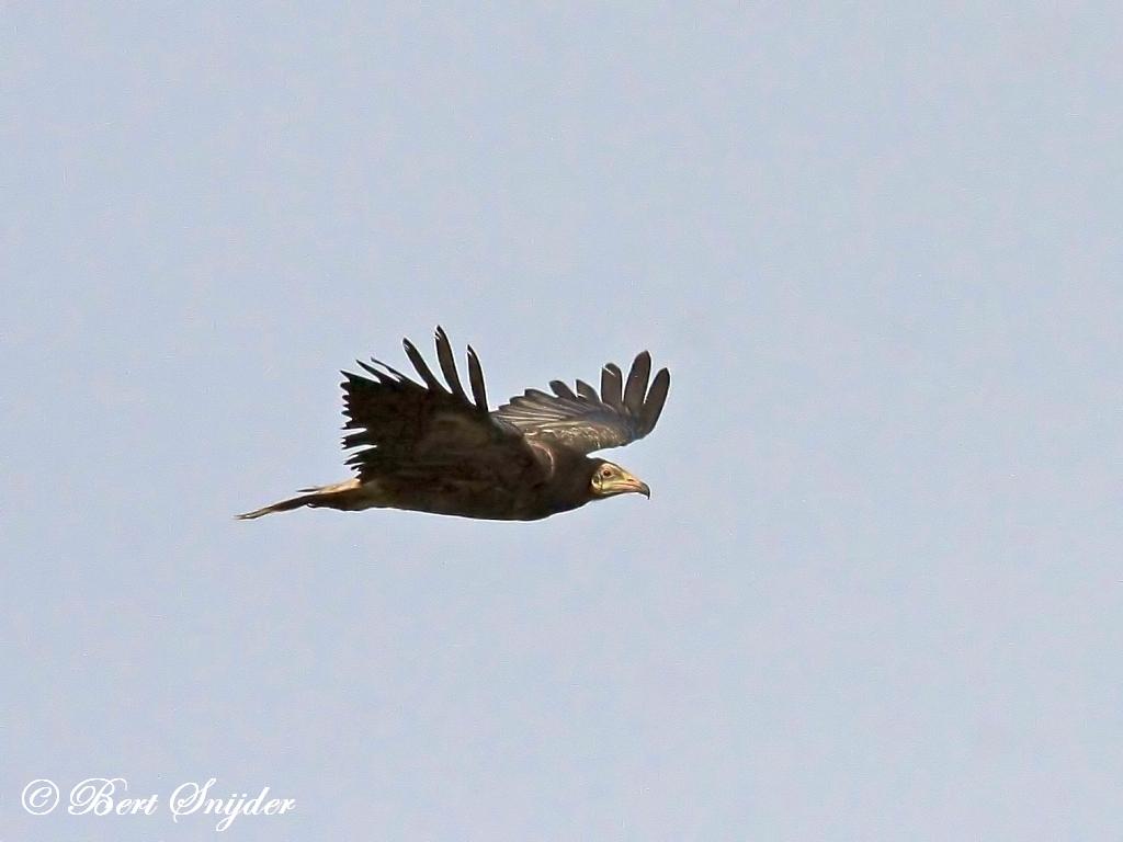 Aasgier Vogelreis Portugal