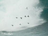 Alk Vogelvakantie Portugal