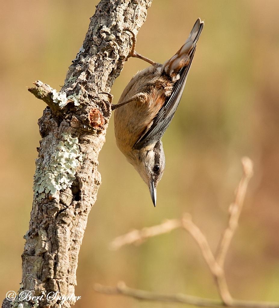 Boomklever Vogelreis Portugal