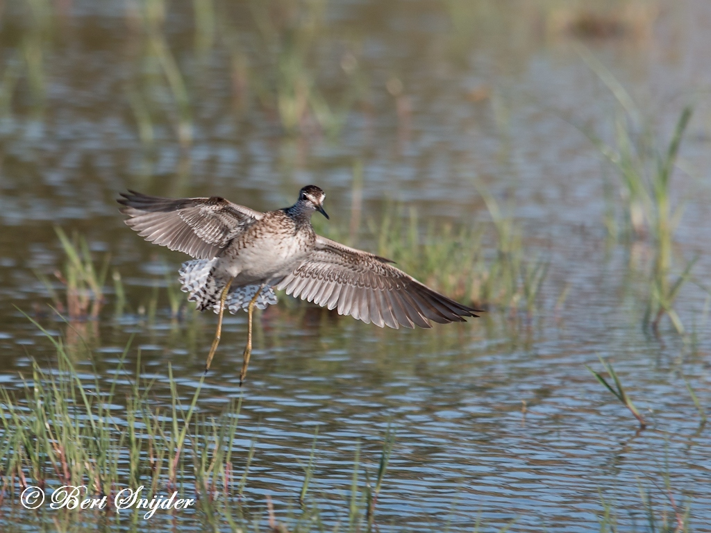 Bosruiter Vogelvakantie Portugal