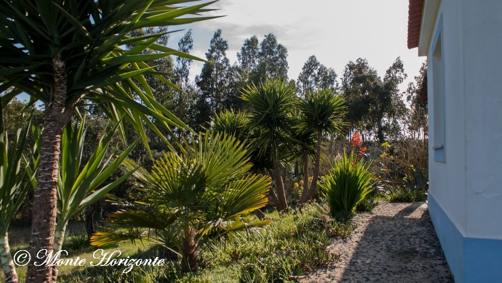 Casa Mimosa Vogelvakantie Portugal