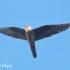 Eleonora´s Valk Vogelreis Portugal
