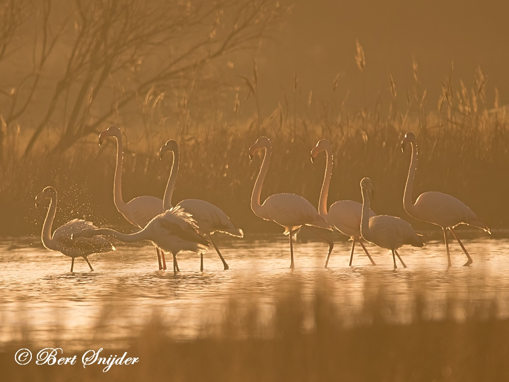 Flamingo Vogelhut BSP2 Portugal
