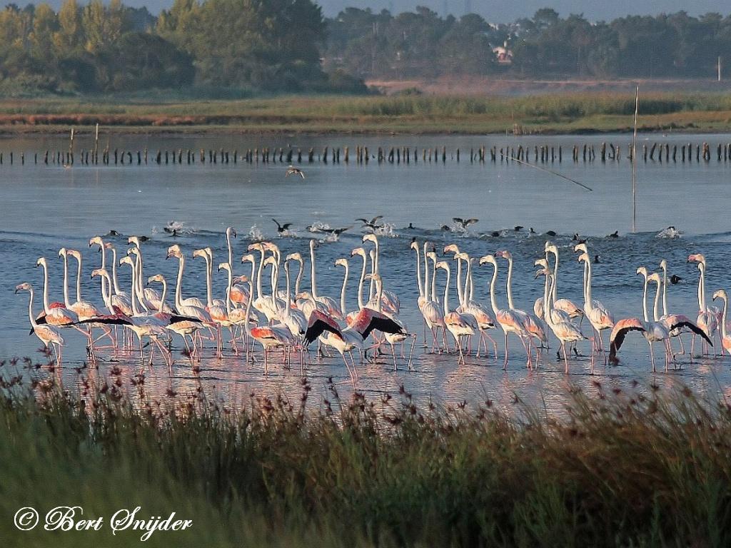 Flamingo Vogelvakantie Portugal