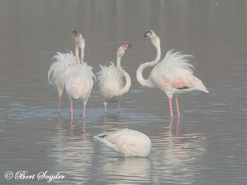 Flamingo Vogelreis Portugal