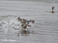 Fuut Vogelkijkhut BSP2 Portugal