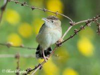 Graszanger Vogelfotografie reis Portugal