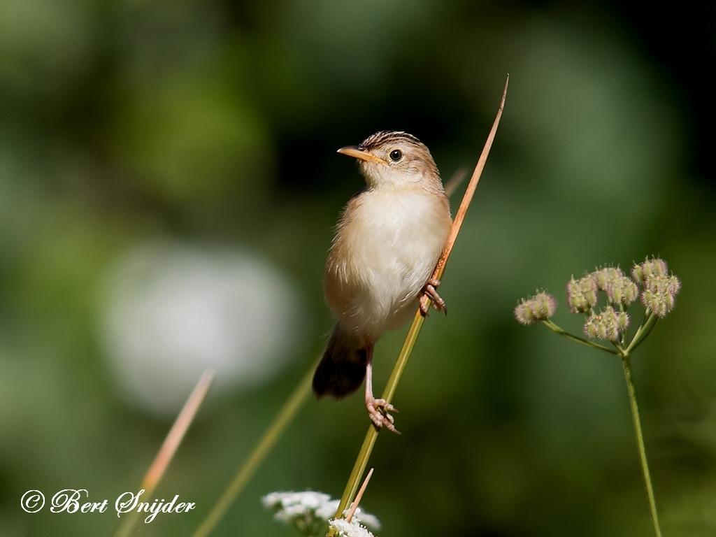 Graszanger Vogelreis Portugal