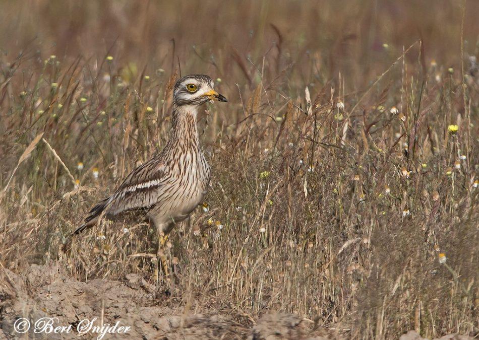 Griel Vogelreis Portugal