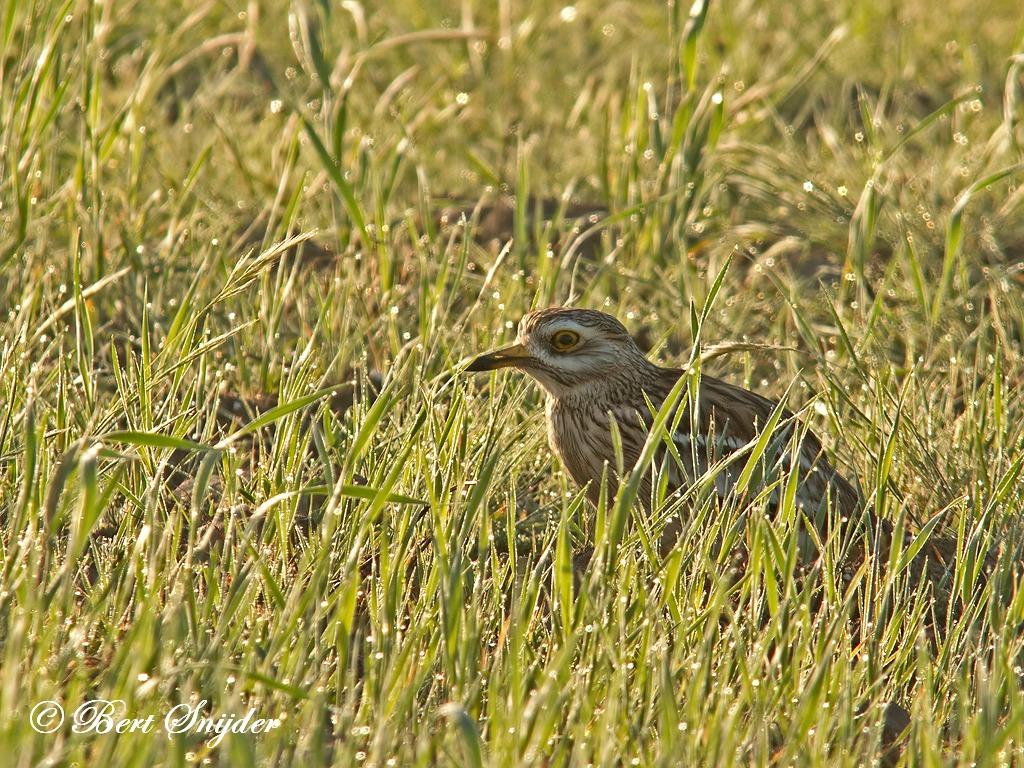Griel Vogelvakantie Portugal