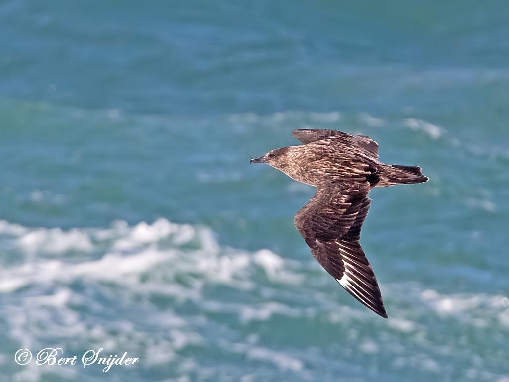 Grote Jager Vogelreis Portugal