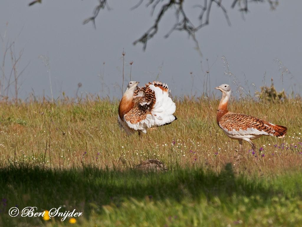 Grote Trap Vogelvakantie Portugal