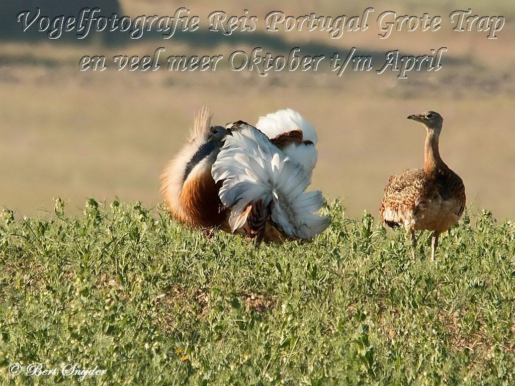 Vogelfotografie Reis Grote Trap en meer Portugal