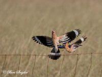 Hop Vogelreis Portugal