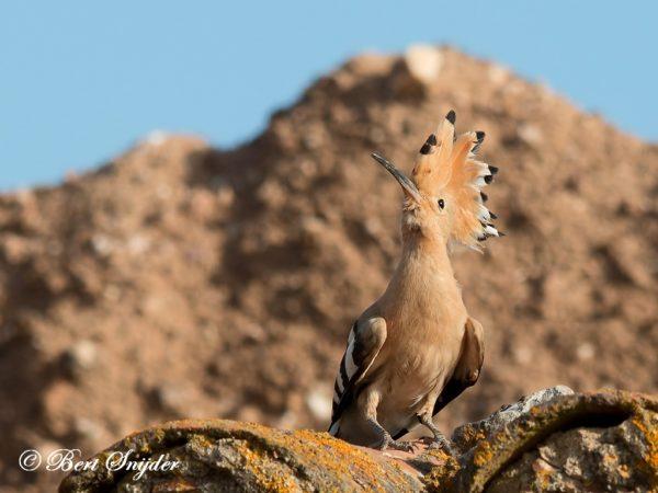 Hop Vogelvakantie Portugal