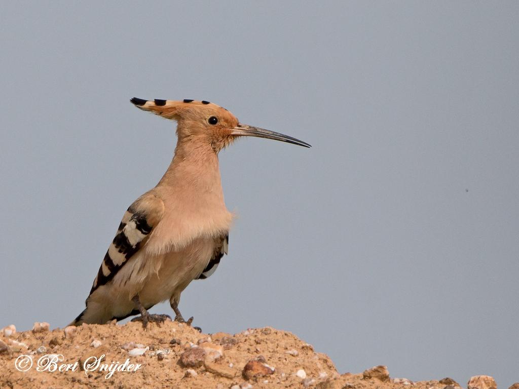 Hop Vogelkijkhut BSP6 Portugal