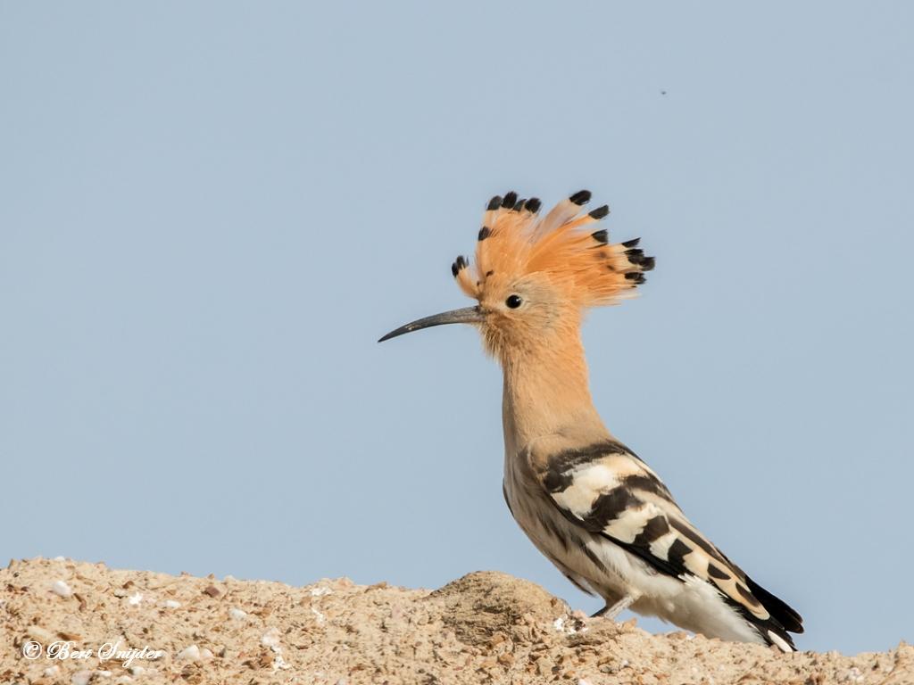 Hop Vogels Portugal
