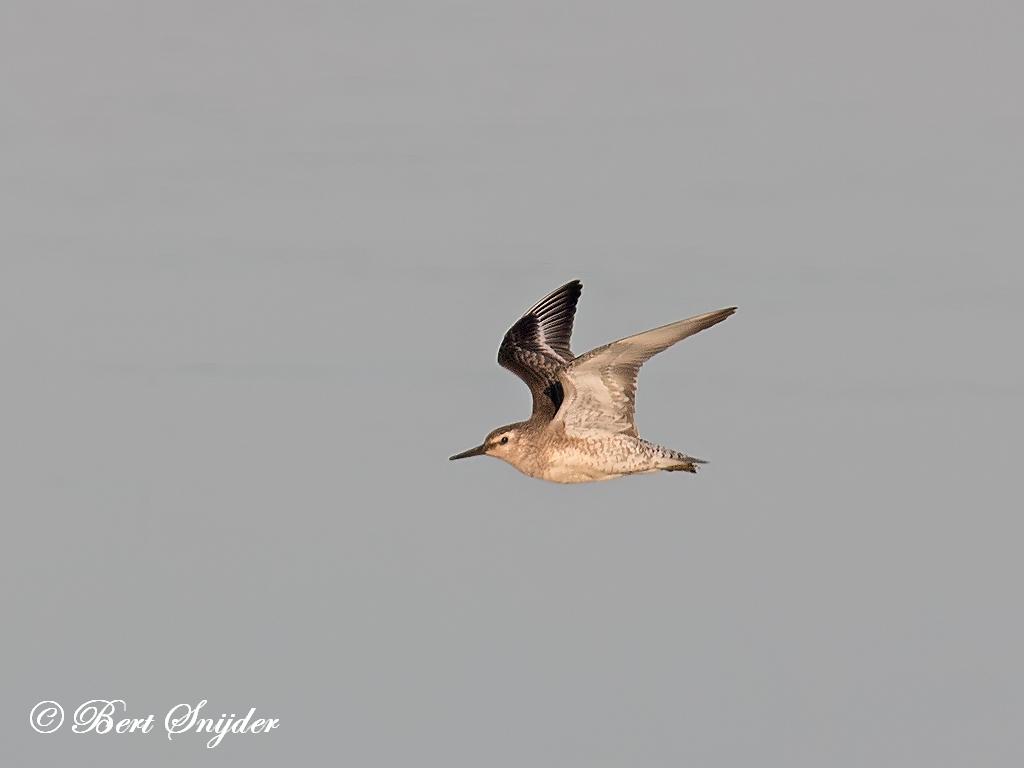 Kanoet Vogelreis Portugal