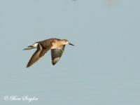 Kemphaan Vogelvakantie Portugal
