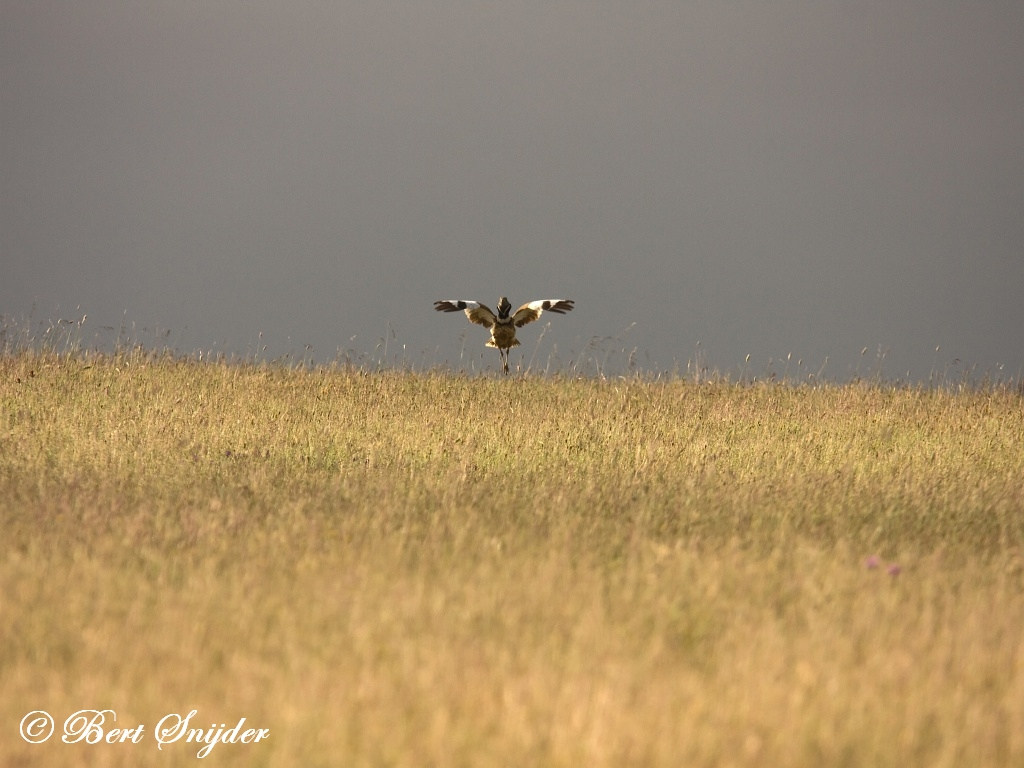 Kleine Trap Vogelfotografie reis Portugal