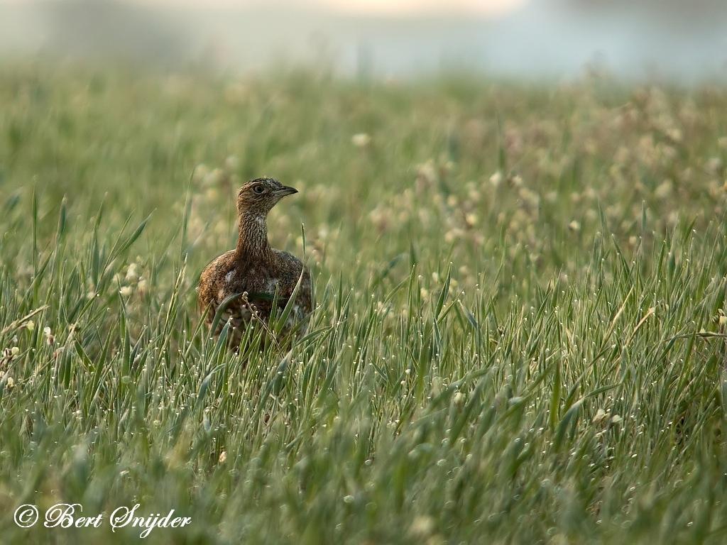 Kleine Trap Vogelvakantie Portugal