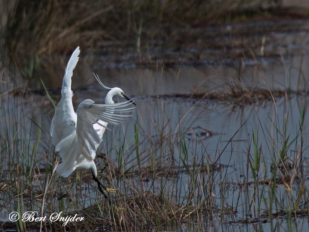 Kleine Zilverreiger Vogelkijkhut BSP2 Portugal