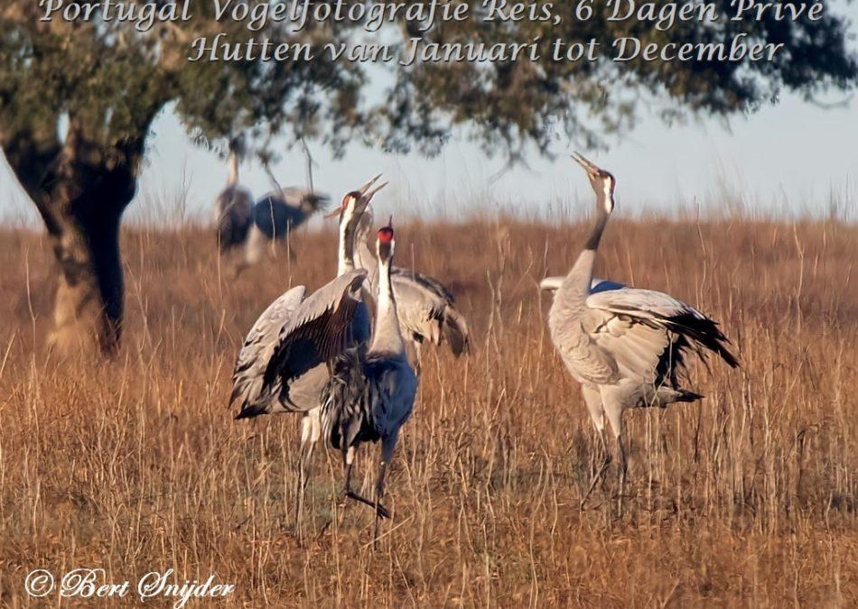 Vogelfotografiereis Portugal