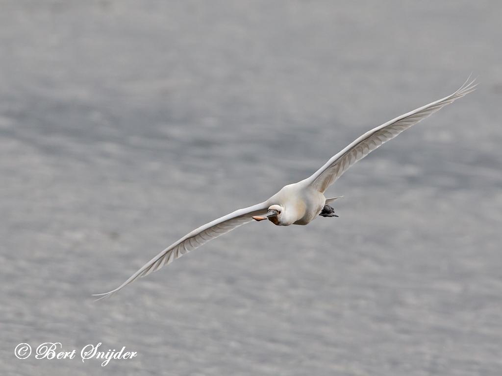Lepelaar Vogelkijkhut BSP2 Portugal