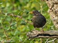 Merel Vogelreis Portugal