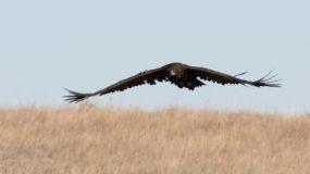 Monniksgier Vogelreis Portugal