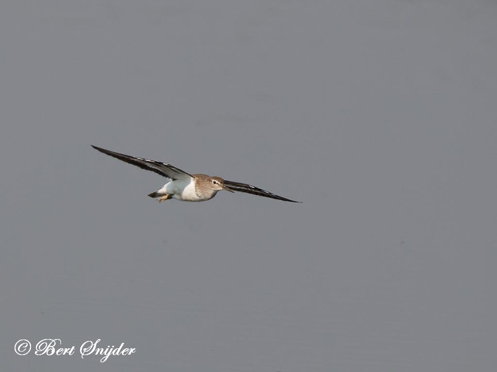 Oeverloper Vogelkijkhut BSP3 Portugal