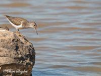 Oeverloper Vogelvakantie Portugal