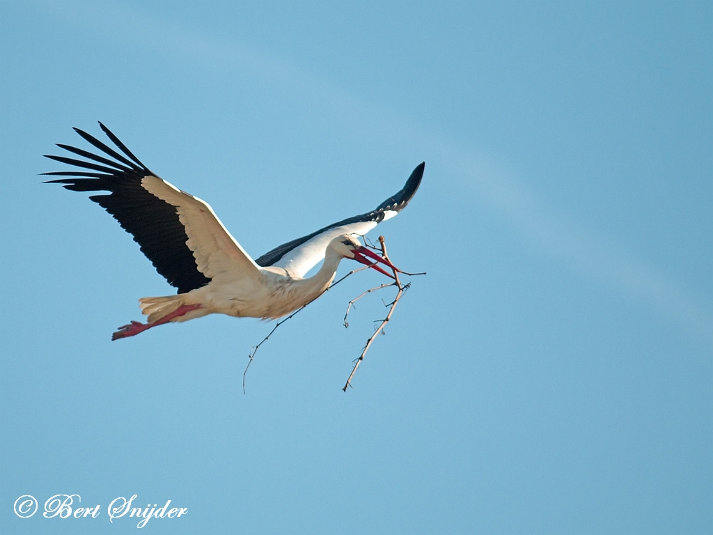 Ooievaar Vogelvakantie Portugal