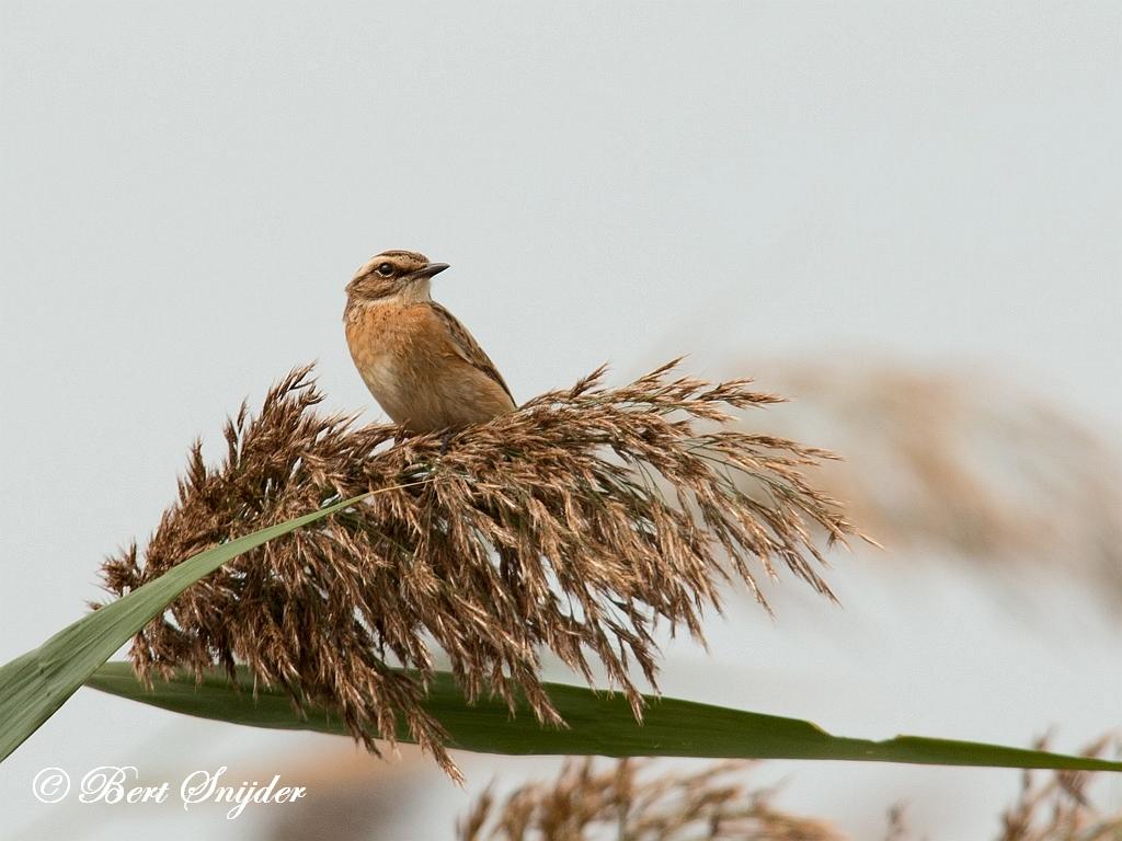 Paapje Vogelvakantie Portugal