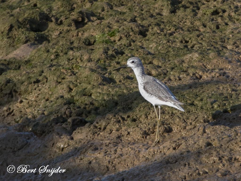 Poelruiter Vogelvakantie Portugal