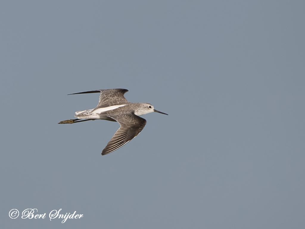 Poelruiter Vogelreis Portugal