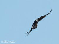 Raaf Vogelvakantie Portugal