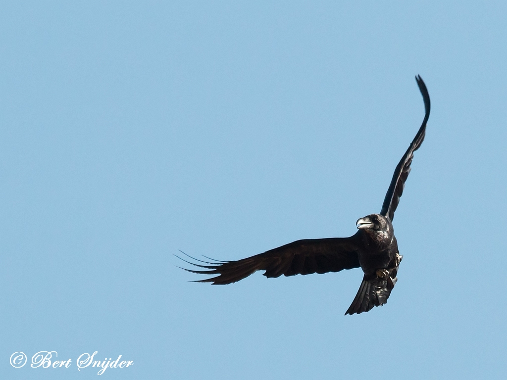 Raaf Vogelreis Portugal