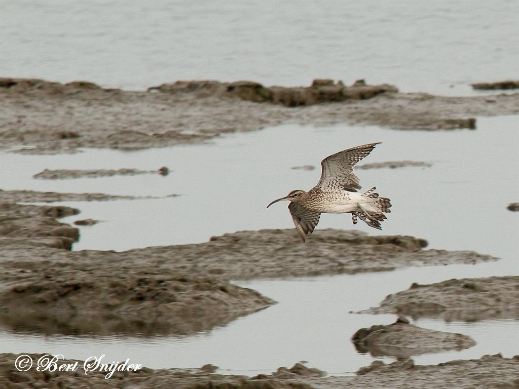 Regenwulp Vogelreis Portugal