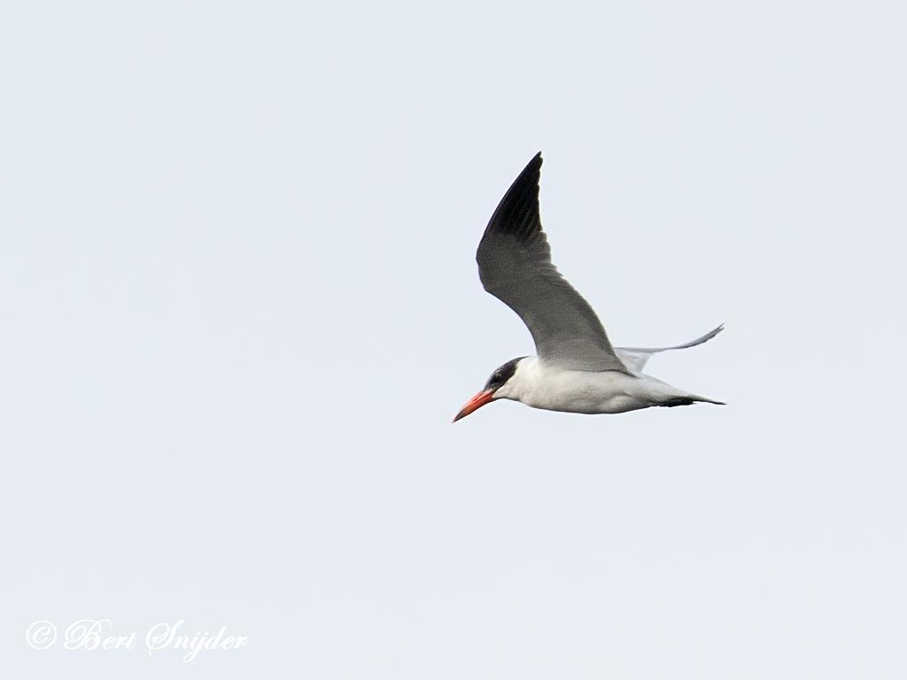 Reuzenstern Vogelreis Portugal
