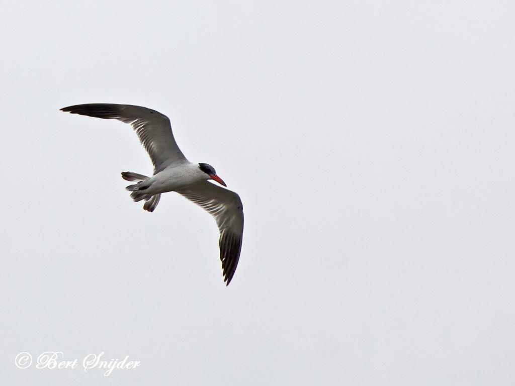Reuzenstern Vogelkijkhut BSP2 Portugal