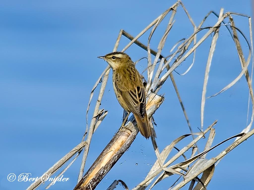 Rietzanger Vogelvakantie Portugal