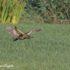 Roerdomp Vogelreis Portugal