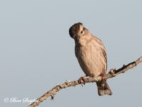Rotsmus Vogelvakantie Portugal