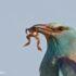 Vogels kijken in Portugal Scharrelaar