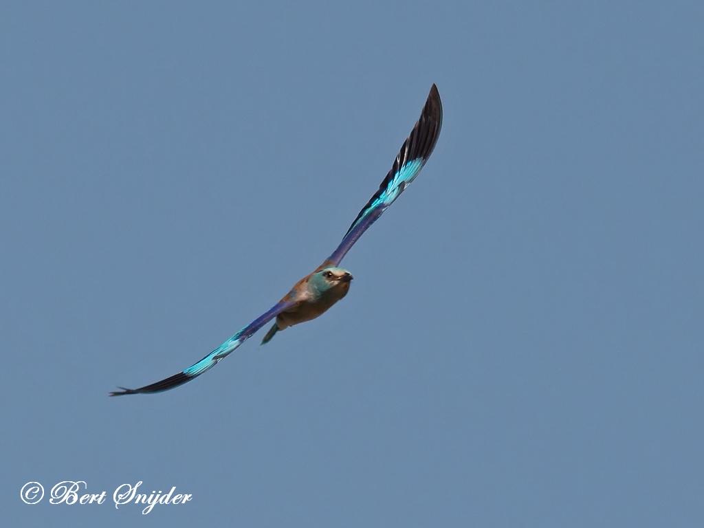 Scharrelaar Vogelvakantie Portugal