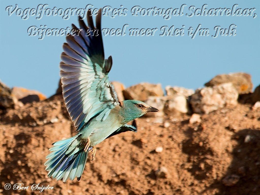 Vogelfotografie Reis Steppevogels Portugal