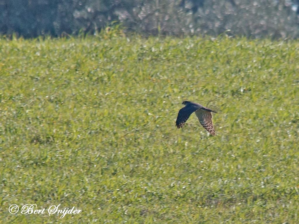 Smelleken Vogelvakantie Portugal