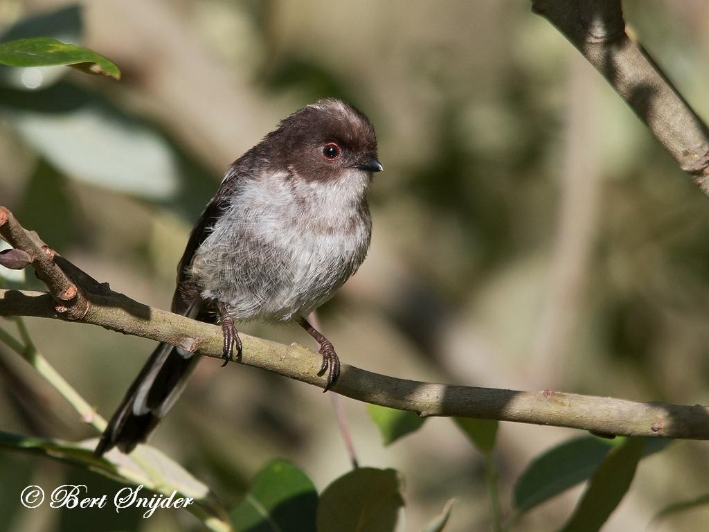 Staartmees Vogelvakantie Portugal